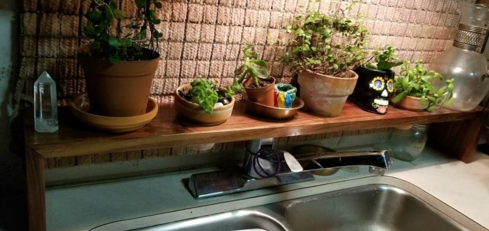 Can You Grow Plants In An RV